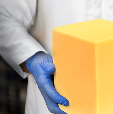 Working holding block of cheddar cheese